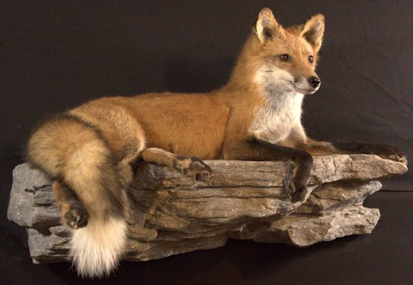 Strohl's Taxidermy | Lehigh Valley, PA | American Game | Birds